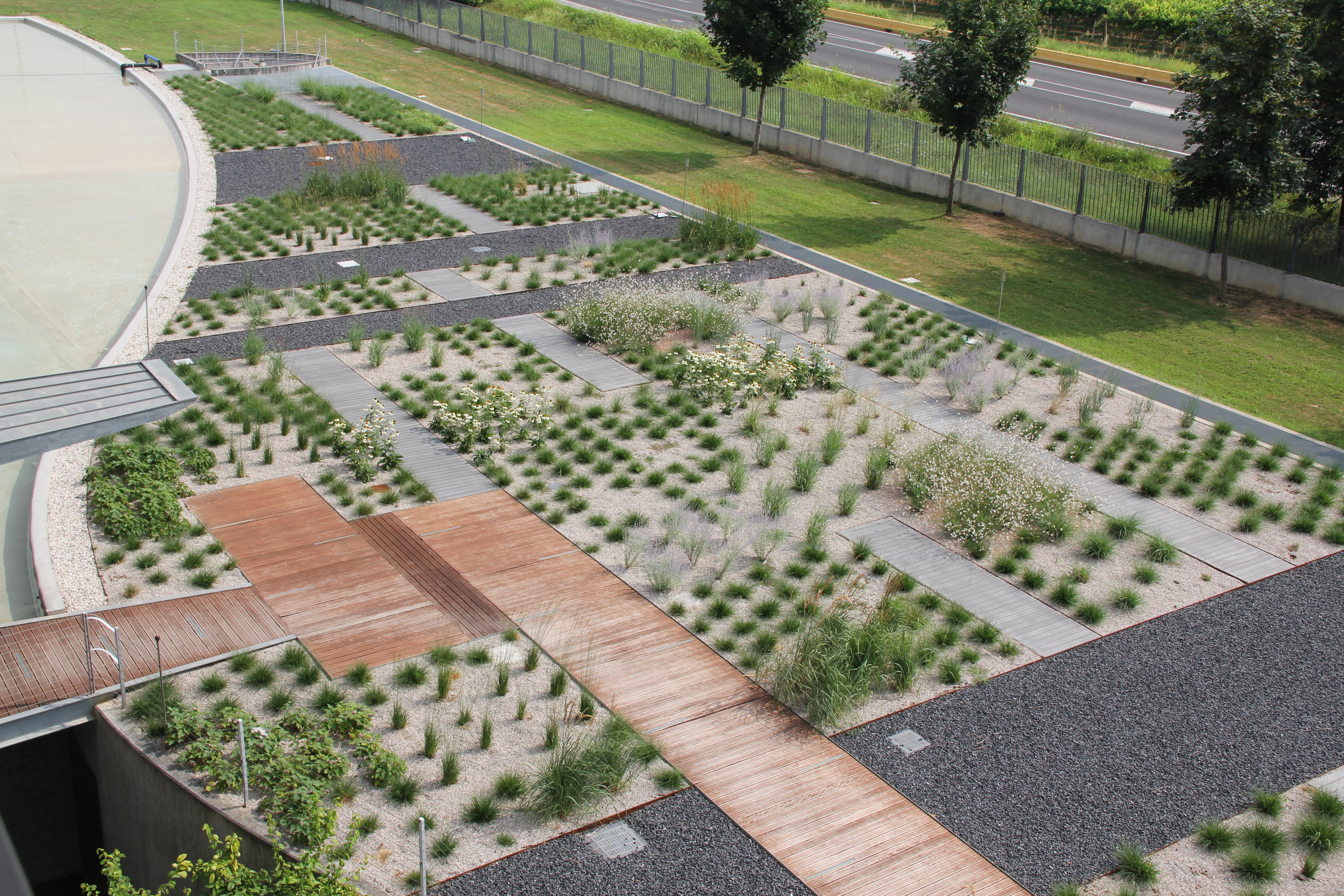 la scenografia vegetativa si sta improntando dopo sei mesi dall'impianto.