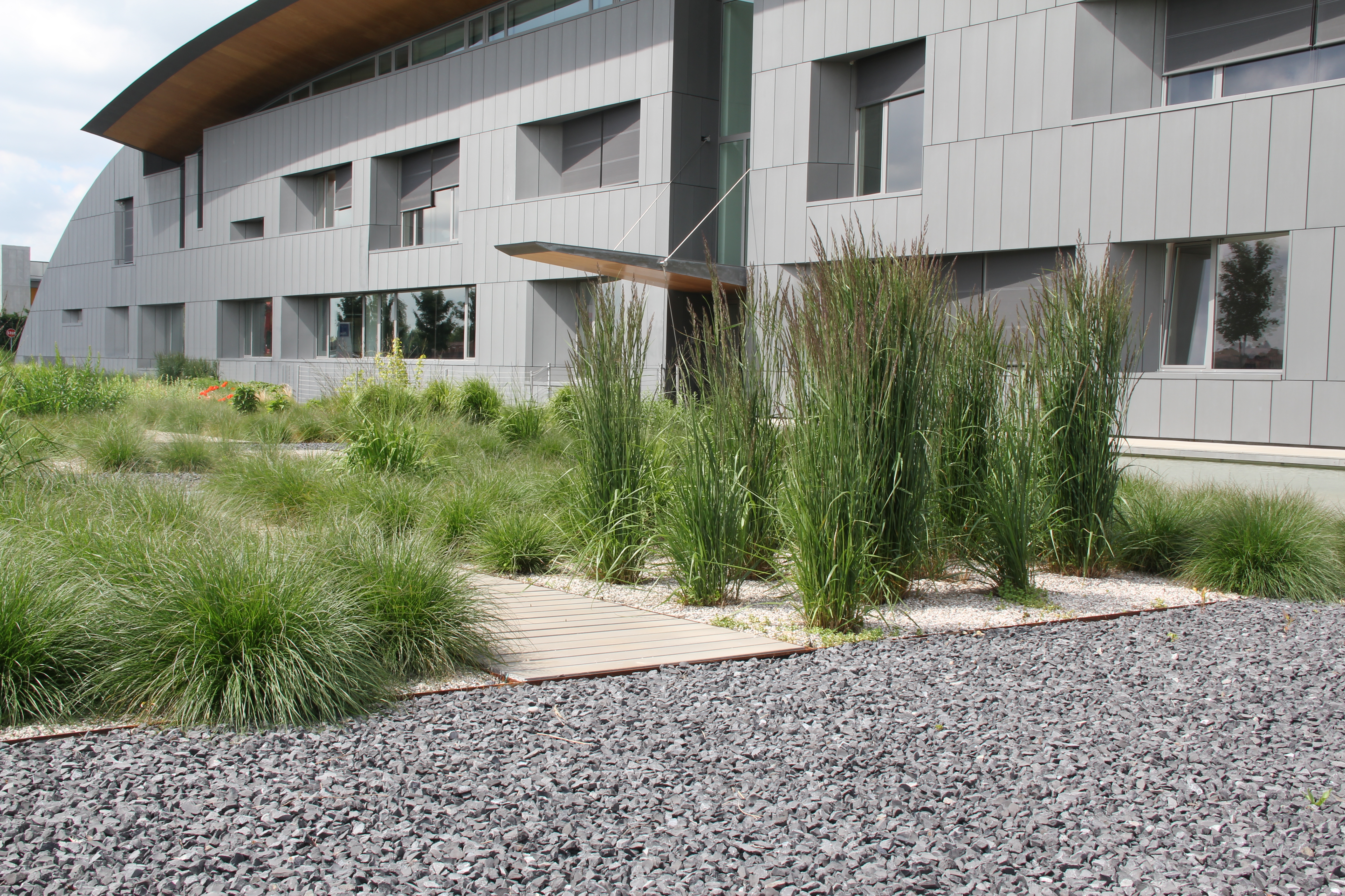 dopo un anno e mezzo circa dalla fine dell'impianto, si nota che i volumi vegetativi stanno raggiungendo le dimensioni finali di sviluppo, anche se siamo nel periodo primaverile.