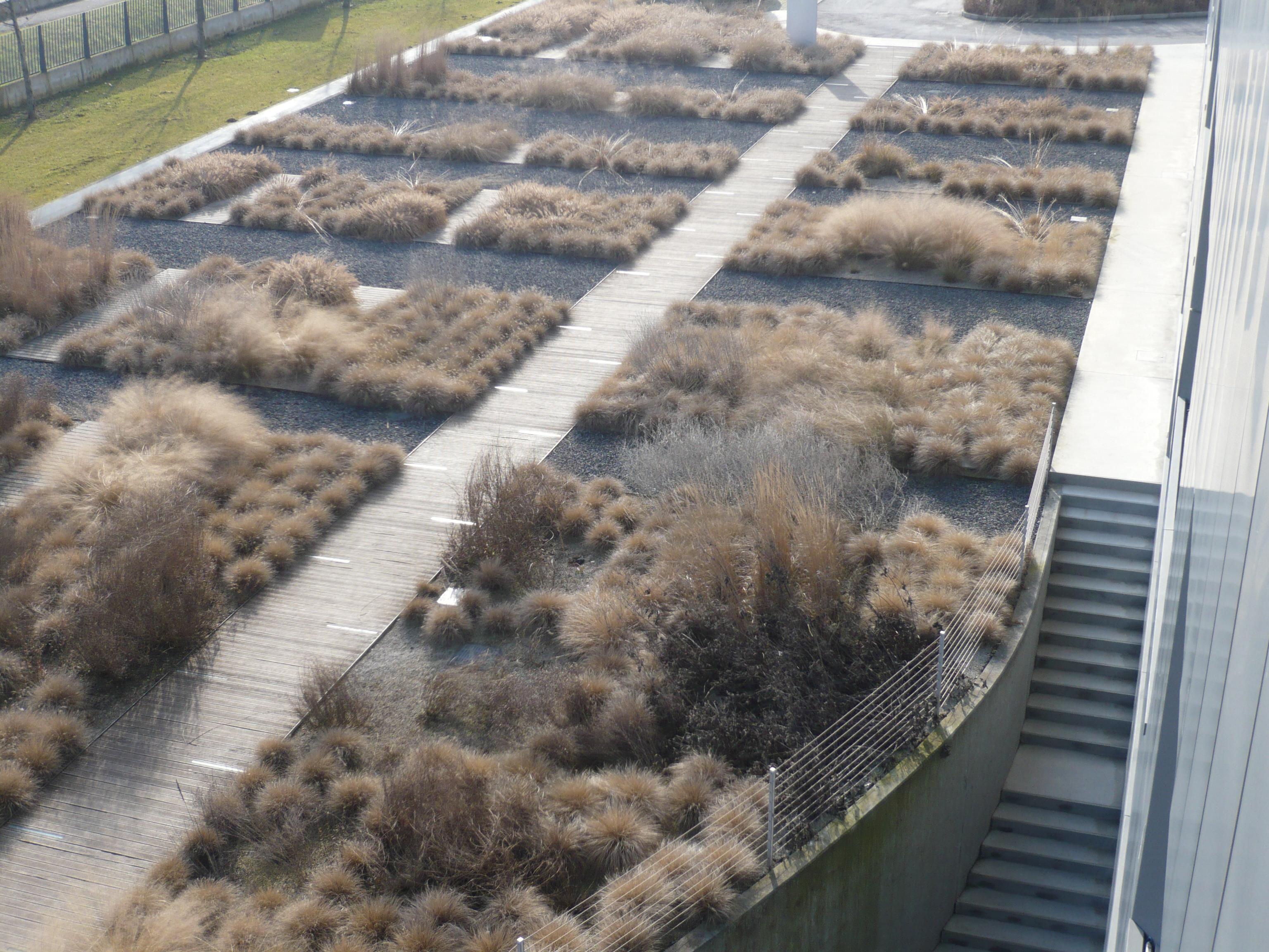 veduta dall'alto della scenografia invernale che disegnano le erbe, nella veste 'rinsecchita' con forme e volumi definiti nelle diversità e colore strutturale.
