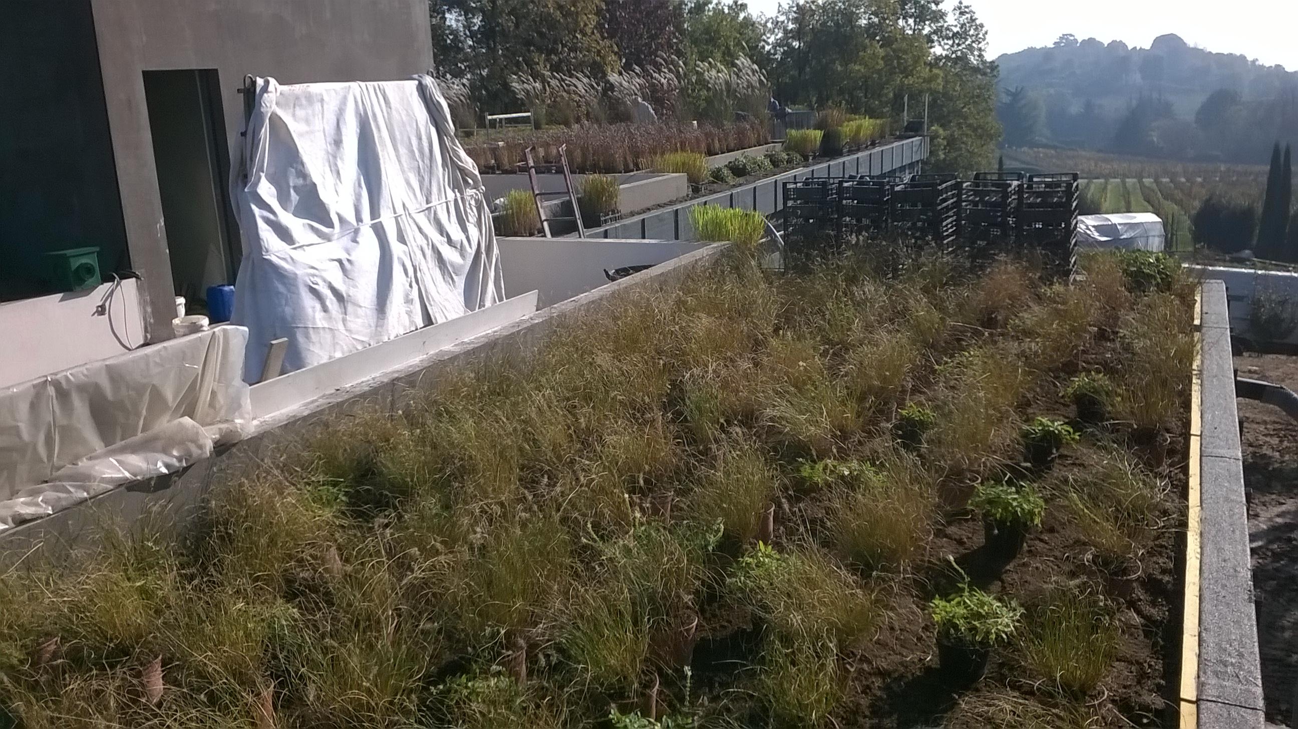 Posizionamento piante