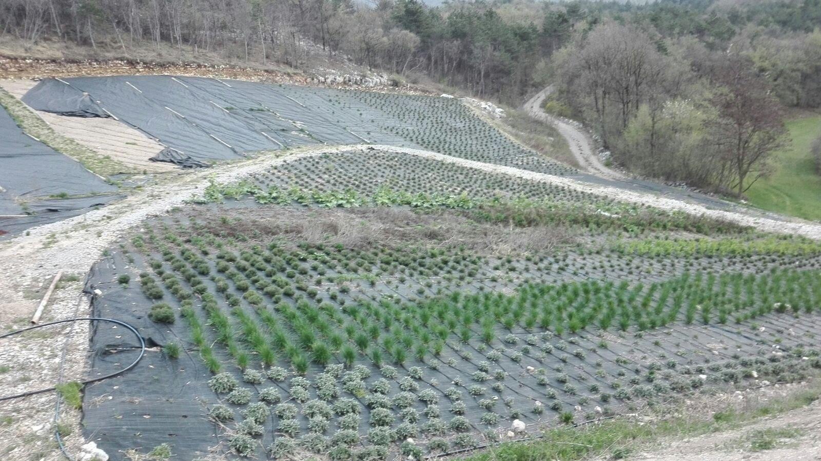 Primo impianto piante aromatiche