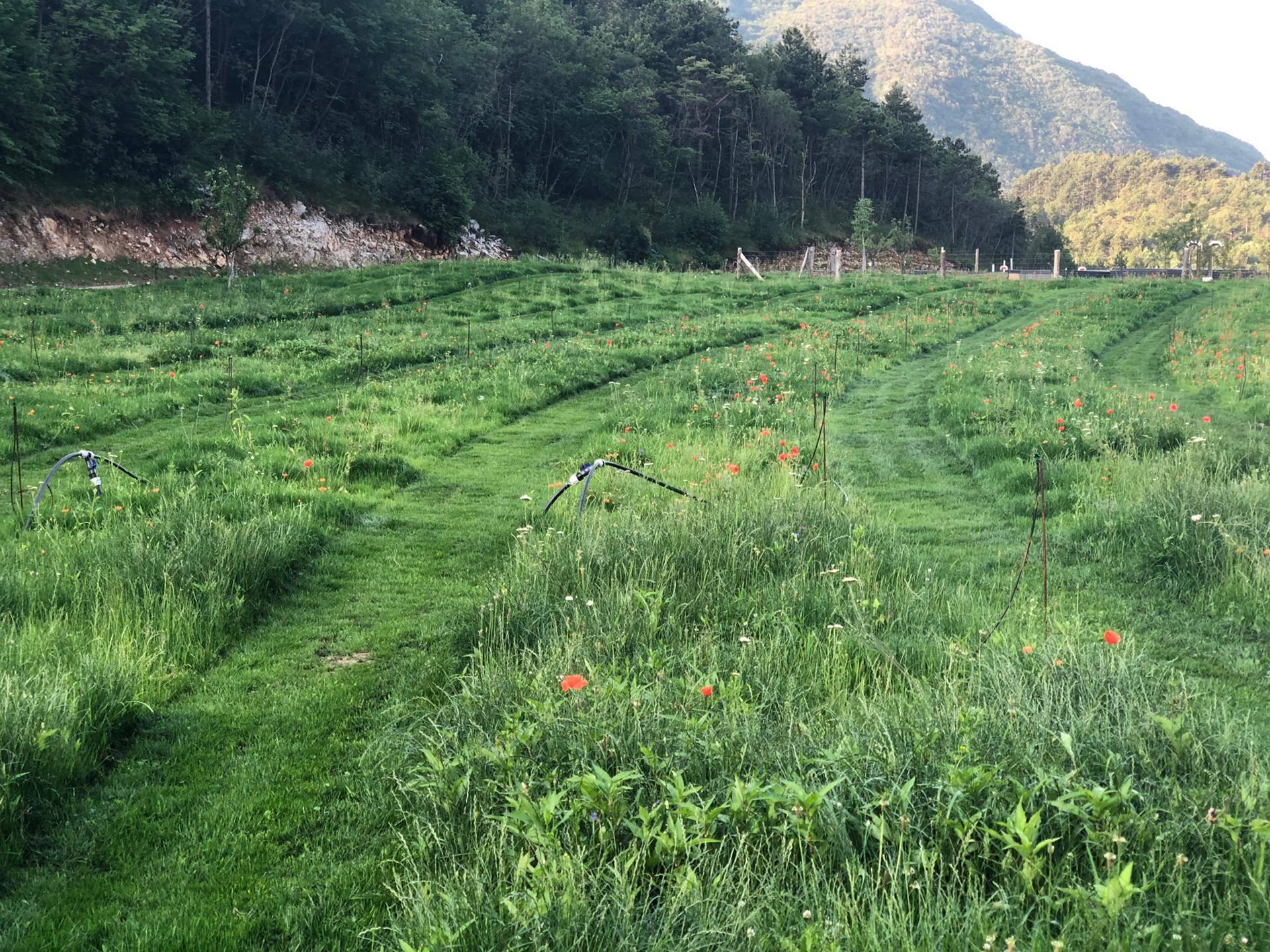 Fine impianto di inserimento piante